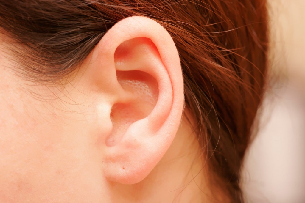 The ears are organs that provide two main functions — hearing and balance — that depend on specialized receptors called hair cells. Hearing: The eardrum vibrates when sound waves enter the ear.